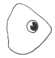 Step 3 How to Draw a Cartoon Fish Step by Step Drawing Tutorial for Kids