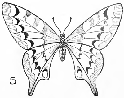 06 Drawing Butterflies Finished How To Draw Step By Step