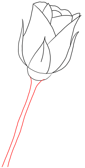 How to draw long stem roses drawing tutorial for valentines day now just draw ccuart Image collections