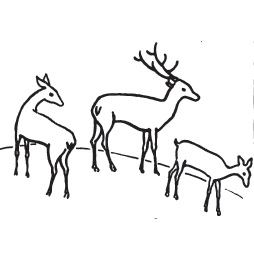 how to draw deer with easy step by step drawing lessons