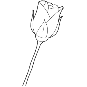 How to draw long stem roses drawing tutorial for valentines day now ccuart Image collections
