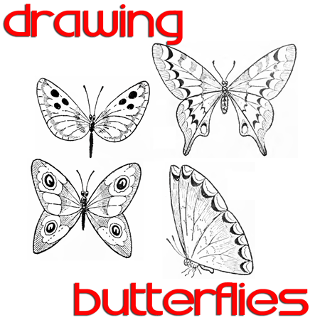 Butterfly drawing easy methods how to draw butterflies step by step