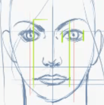 Proportions Of A Face. Proportions of the Face – What