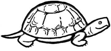 How to Draw Turtles with Easy Step by Step Drawing Instructions