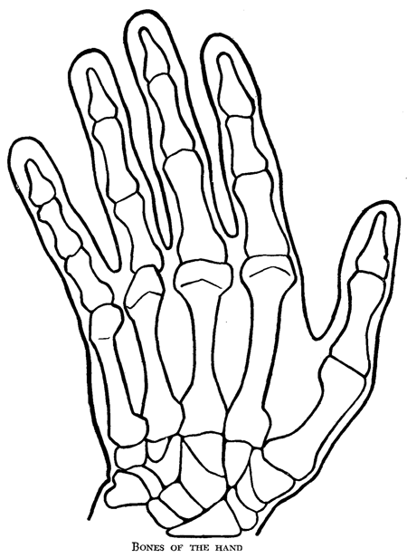 drawing hands : how to draw hands and underlying structure - how, Skeleton