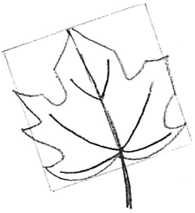 leaf drawing. now draw leaf drawing