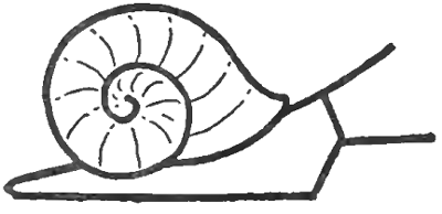 Snails With Simple Step By Drawing