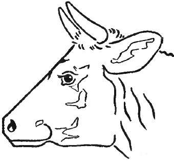 How To Draw Cow S Face And Head With Step By Step Drawing Tutorial