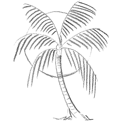 Gallery For gt How To Draw A Realistic Palm Tree