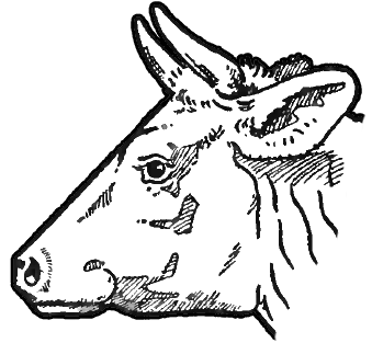 How to Draw Cow's Face and Head with Step by Step Drawing ...