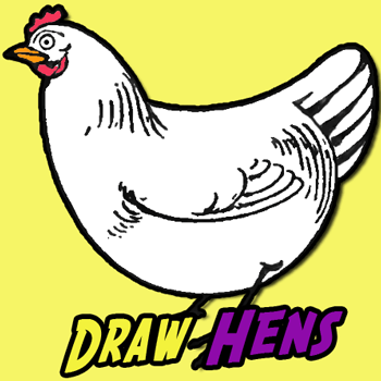 how to draw chickens hens with easy step by step drawing tutorial