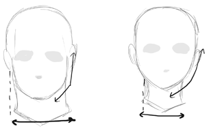 For A Realistic Drawing An Ideal Male Head Often Has Well Pronounced Jaw Compared To Females