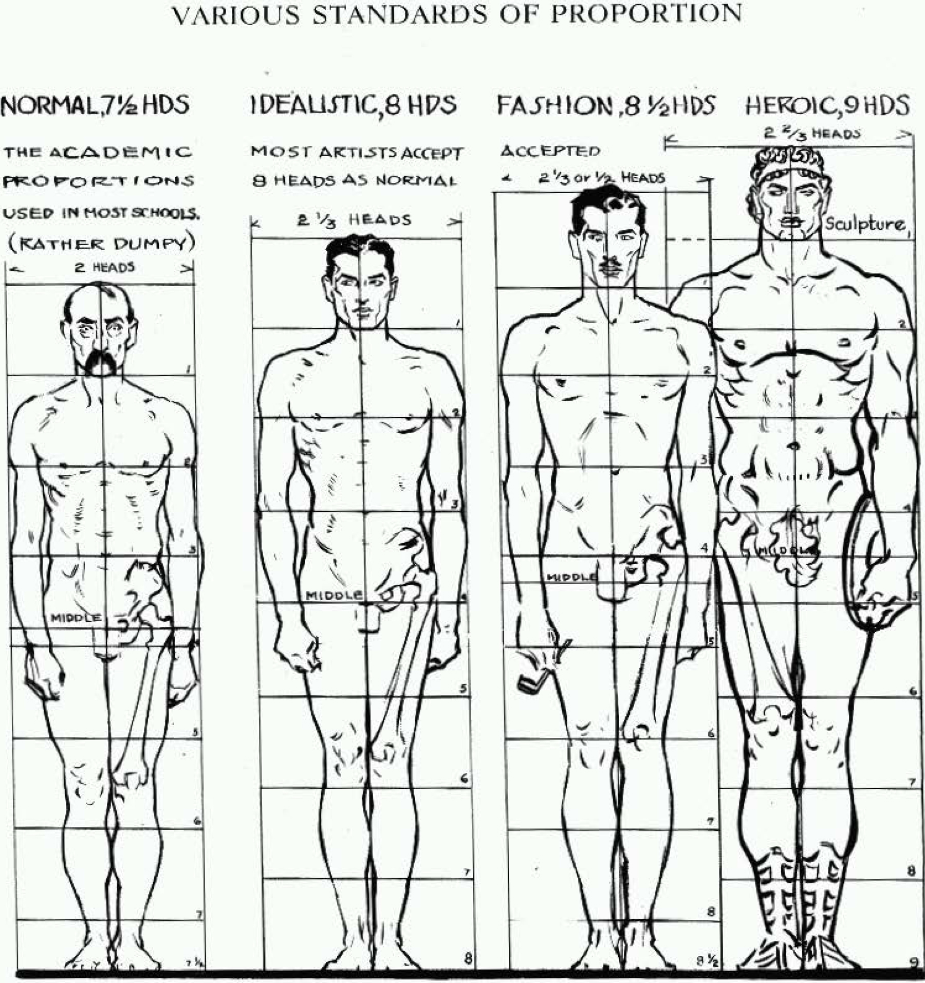 Human Body Male Proportions